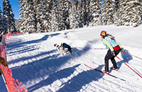 Grand Mesa Summit Sled Dog Challenge